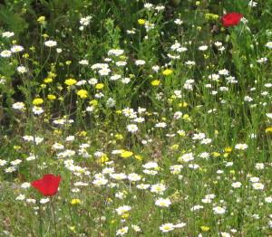 LesvosViewflowers