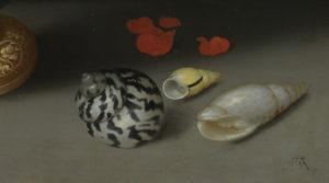 seashell-detail-432px