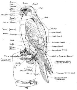 Falconchart